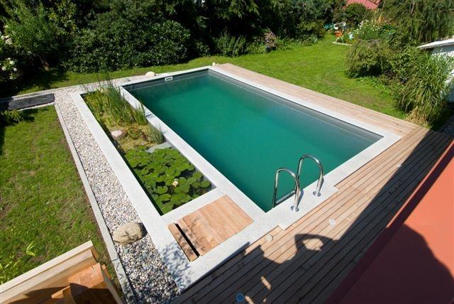 The traditional coping on this natural swimming pool demonstrates that natural  swimming pools can be designed in many ways and do not always have to