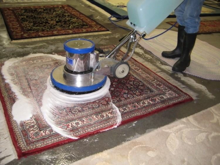 We can help you clean your carpet by removing all kinds of odors caused by  accidents in the house and pet odor in general