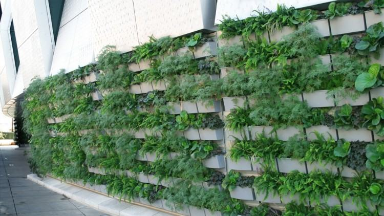 outdoor living wall best plants